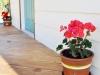 geraniumguards